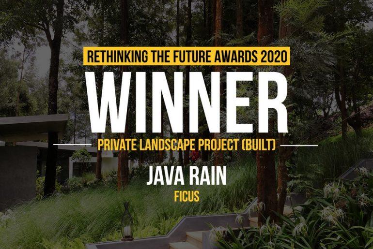Java Rain | Ficus