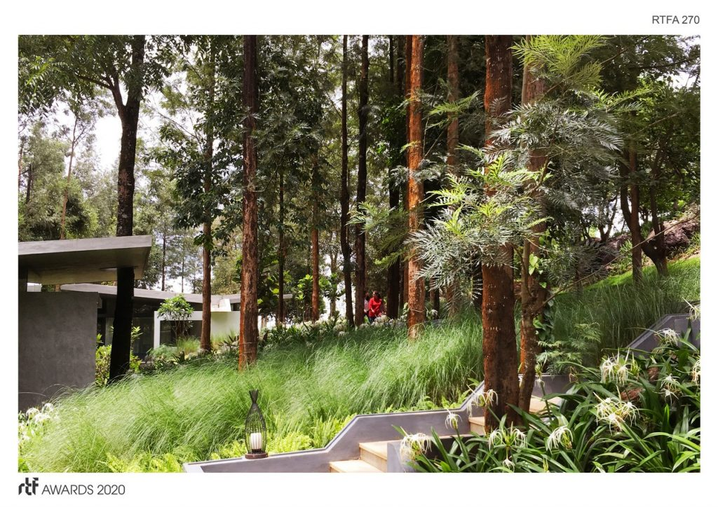 Java Rain | Ficus - Sheet1
