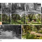 Java Rain | Ficus - Sheet6