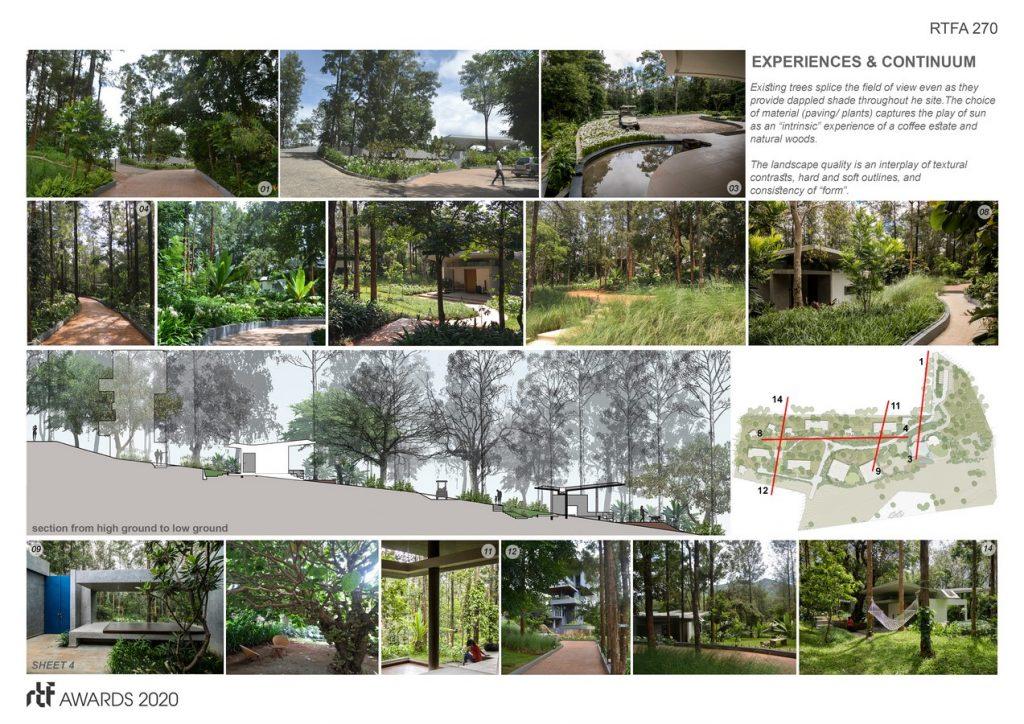 Java Rain   Ficus - Sheet4